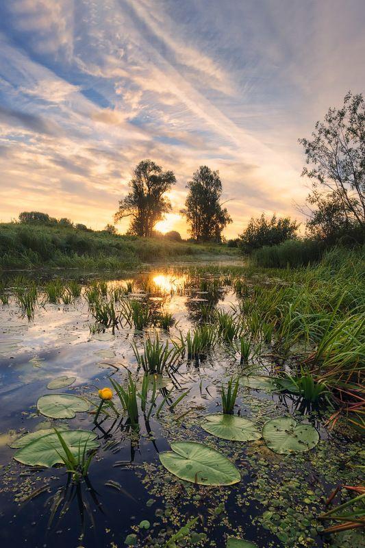 лето, болото, кувшинки Болотная флораphoto preview