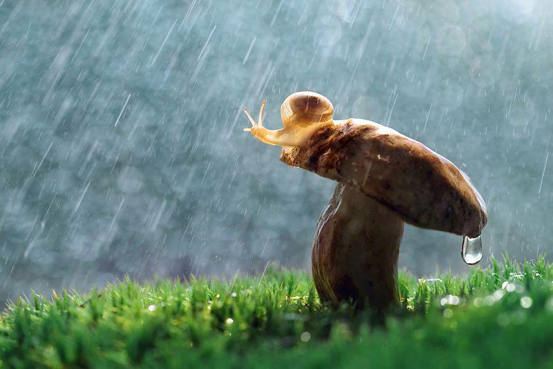 макро, макрофото, улитка, гриб, дождь, лес, природа, капли, никон, сигма, сигма105, macro, macro, snail, mushroom, rain, forest, nature, drops, nikon, sigma, sigma105, Грибной дождьphoto preview