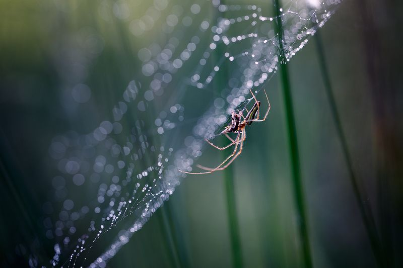 spider,insects,spider web,light,bokeh,beautiful,fairy,macro,wild,nature,insect,drops Spiderphoto preview