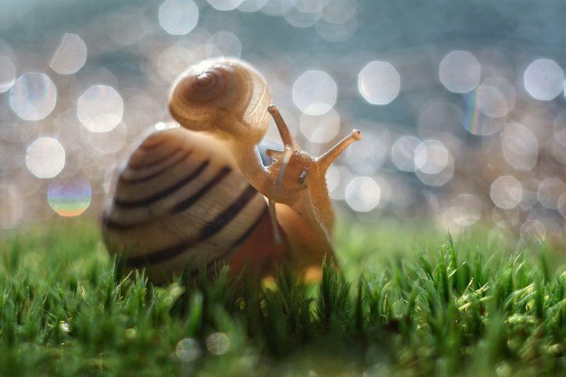 макро, макрофото, улитка, гриб, дождь, лес, природа, капли, никон, сигма, гелиос, macro, macro, snail, mushroom, rain, forest, nature, drops, nikon, sigma, sigma105, поцелуйphoto preview