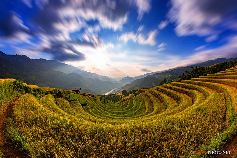 quanphoto, landscape, valley, rice, terraces, farmland, farming, agriculture, mountains, rural, countryside, vietnam Golden Rice Terraces Valleyphoto preview