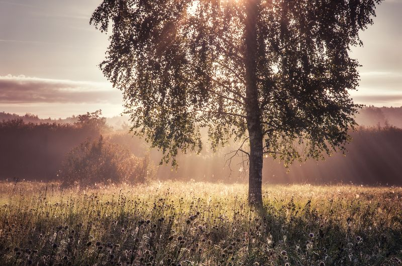 природа, рассвет, туман, солнце, пейзаж, nature, dawn, sun, fog, landscape Летние утроphoto preview