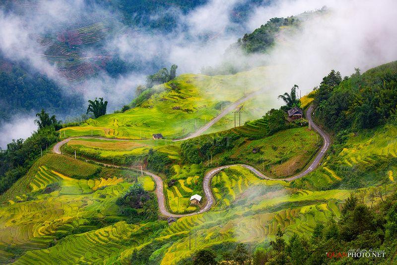 quanphoto, landscape, clouds, road, golden, harvest, rice, terraces, fields, highland, plateau, farmland, agriculture, vietnam Golden Roadphoto preview