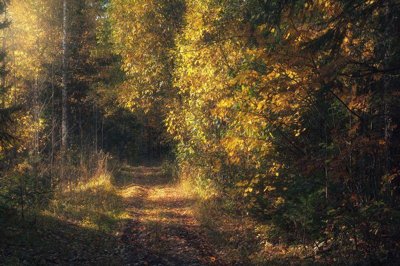 осень, вечер, тропинка, дерево, роща, лес Скоро осеньphoto preview