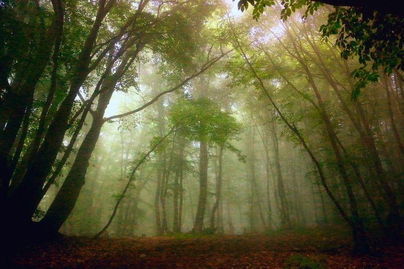 Лес, в лесу, туман, дымка, облако, свет, цвет, пейзаж, природа, красота, Россия, чаща, деревья, тропа Лес в облакахphoto preview