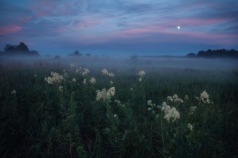 природа, закат, туман, луна, пейзаж, цветы, nature, sunset, fog,moon, fog, landscape, Туманные вечераphoto preview