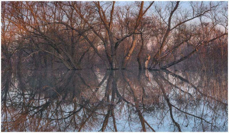 утро, рассвет, разлив, весна, природа, пейзаж, паводок, отражения Графика отраженийphoto preview