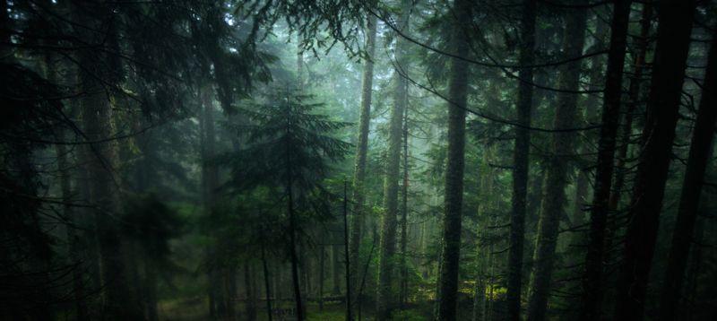 montenegro, forest, durmitor, after rain, evergreen, nature, outside, черногория, лес, durmitor, после дождя, вечнозеленый, природа, снаружи, Always greenphoto preview