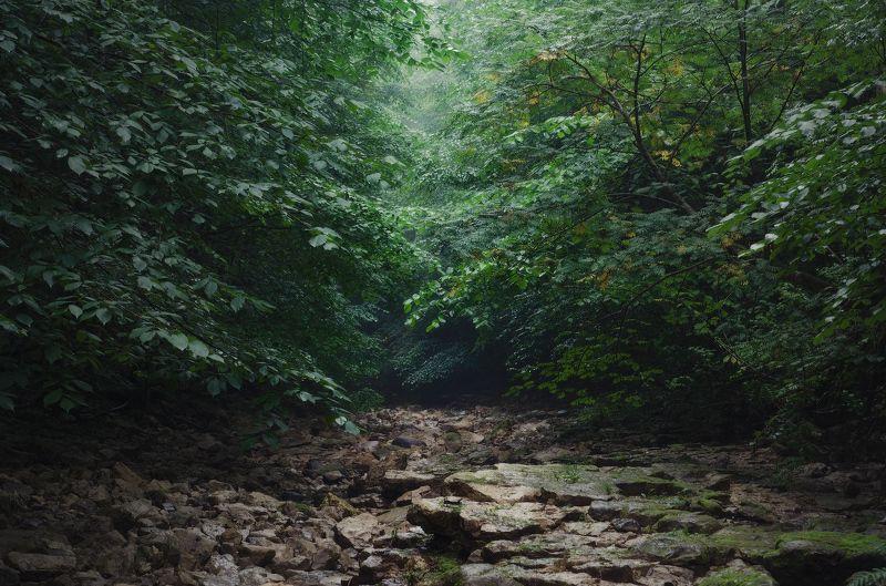 Заглянув в глаза лесу, под веки листвы...photo preview