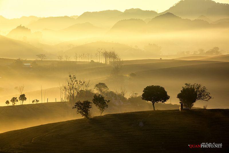 quanphoto, landscape, nature, morning, sunrise, dawn, mist, misty, hill, plantation, tea, highland, plateau, vietnam WonderLandphoto preview