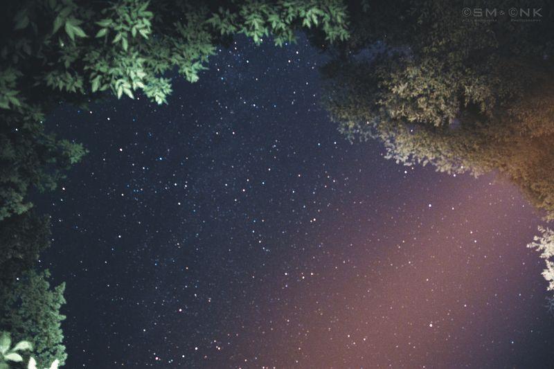 космос, небо, звезды, лес, деревья, свет, мир, красота Окно в далекий мирphoto preview