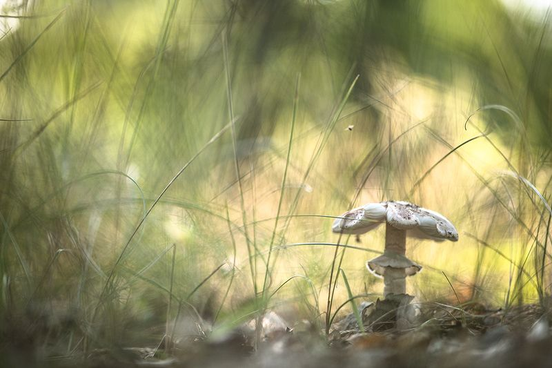 гриб, мошка, макро, свет, травка, воронеж, геннадий мещеряков, позитив Мультфильм про мошку Варю...photo preview