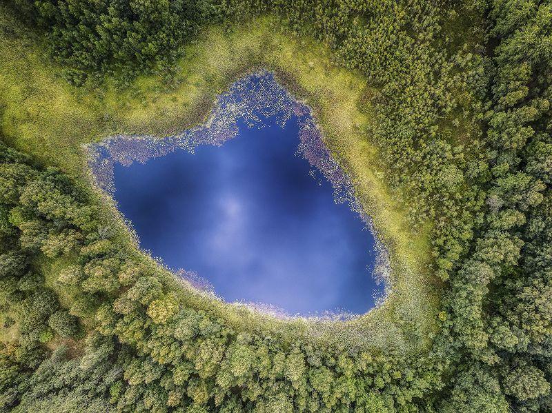 Лесное озеро.photo preview