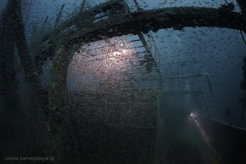 wreck fish schoolfish underwater Рыбный суп photo preview