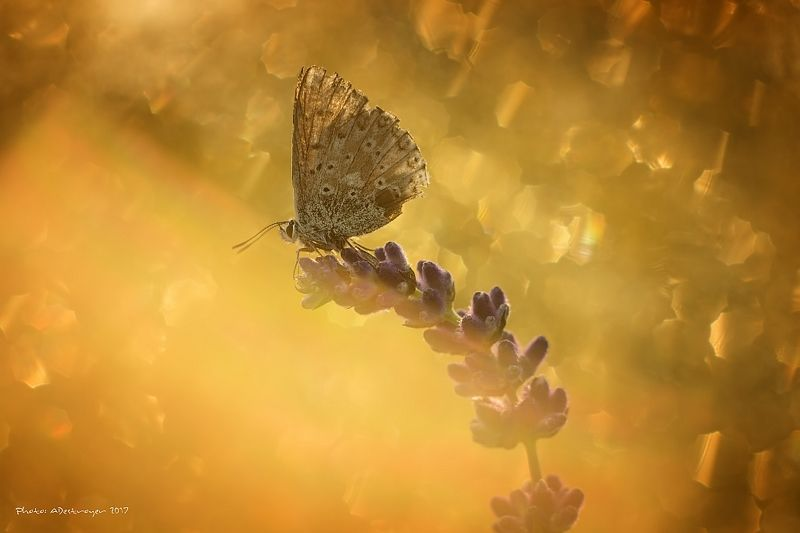 macro nature butterfly First Ray of Sun Iphoto preview