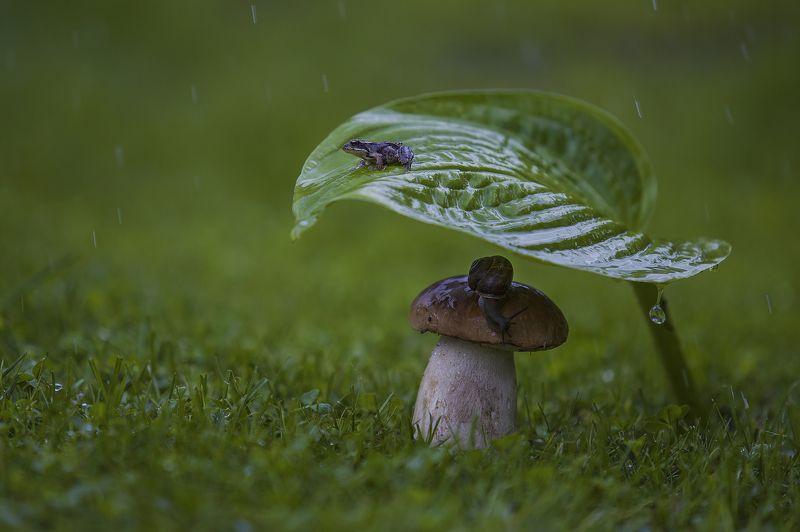 лягушка, улитка, гриб, дождь, макро ***photo preview
