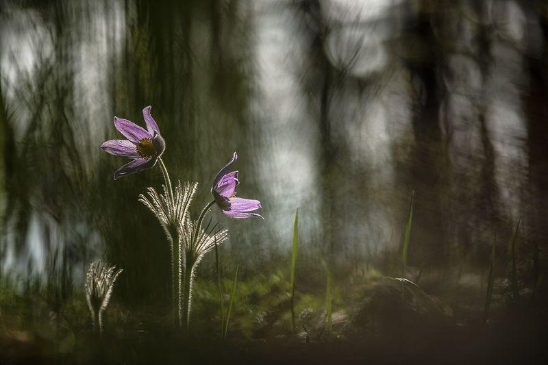 В сумеречном лесу...photo preview