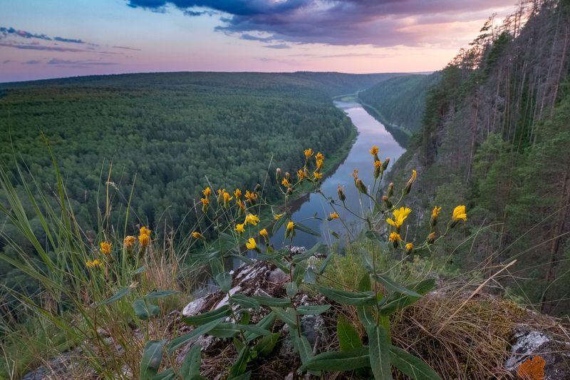 закат, цветы, река, скала, лес, чусовая, пермский край Закат на вершине скалы Великанphoto preview