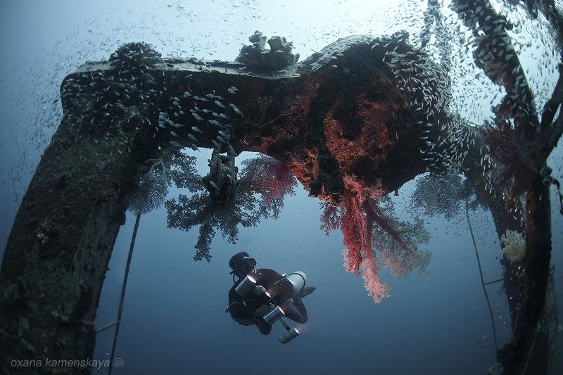 wreck fish underwater shipwreck stern Вторая жизньphoto preview