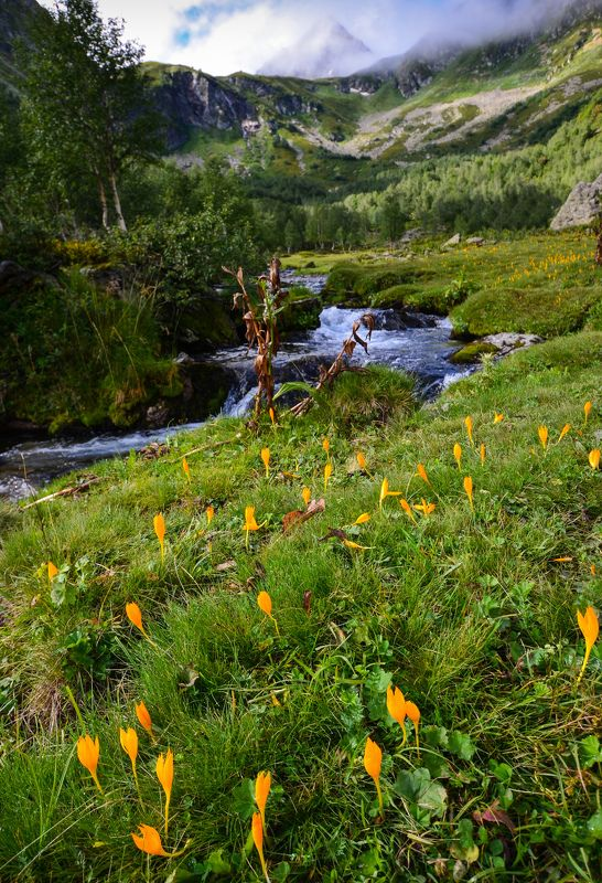 Архыз, цветы, горы Цветущие берегаphoto preview