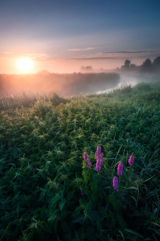 poland podlasie sky clouds sunrise dawn outdoor summer mood fog mist river wildflower Wearing that satine dress of yours...photo preview