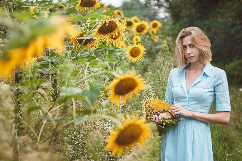 Sunflowerphoto preview