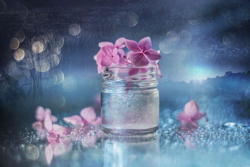 hortensja,kwiaty,martwa natura,bokeh,przyroda,natura Hortensja różowaphoto preview