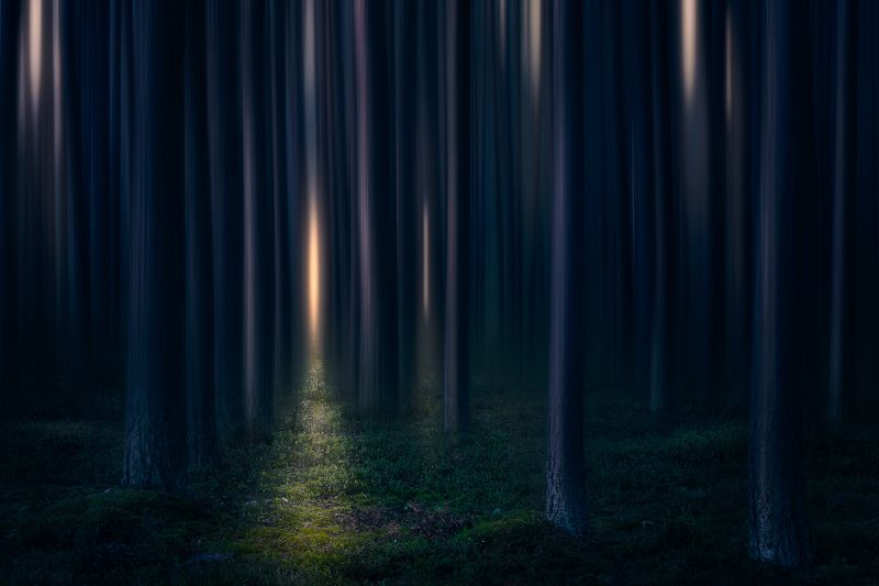abstract forest trees mood fairytale podlasie poland lotr Fangorn forest...photo preview