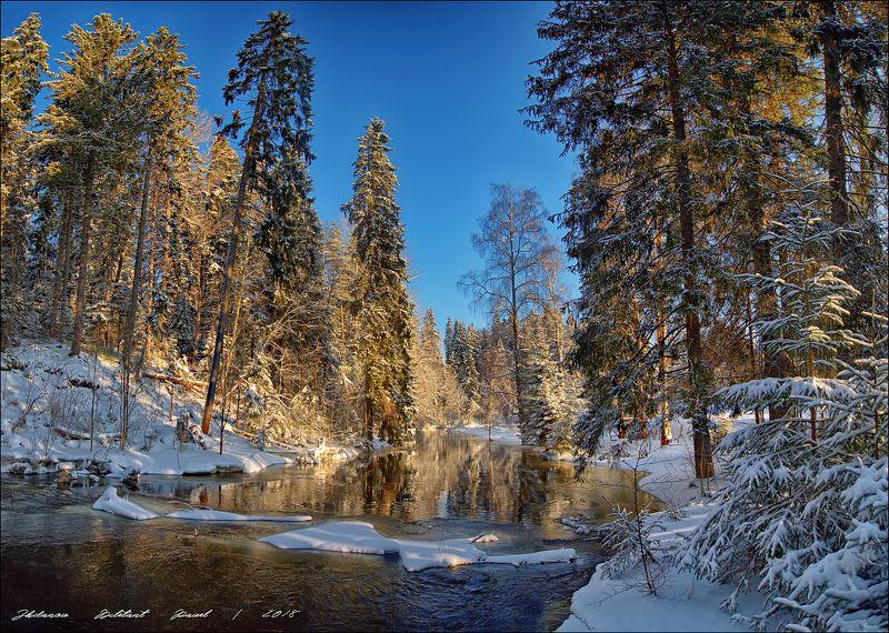 Утро в зимнем лесу.photo preview