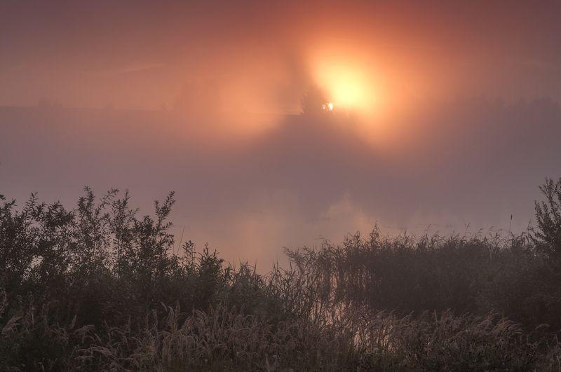 россия,лето,туман,рассвет,река,солнце Утро туманноеphoto preview