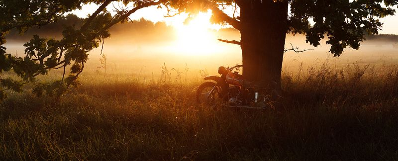 утро, туман, дуб, иж, брянск, алексей платонов, пейзаж,old grandfather izh old grandfather izhphoto preview