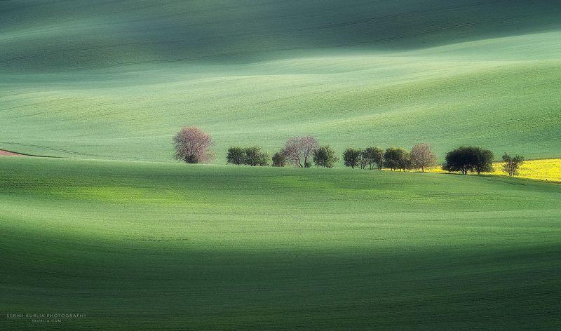 Moravia, trees, meadow, fields, grass, green, hills Caravanphoto preview