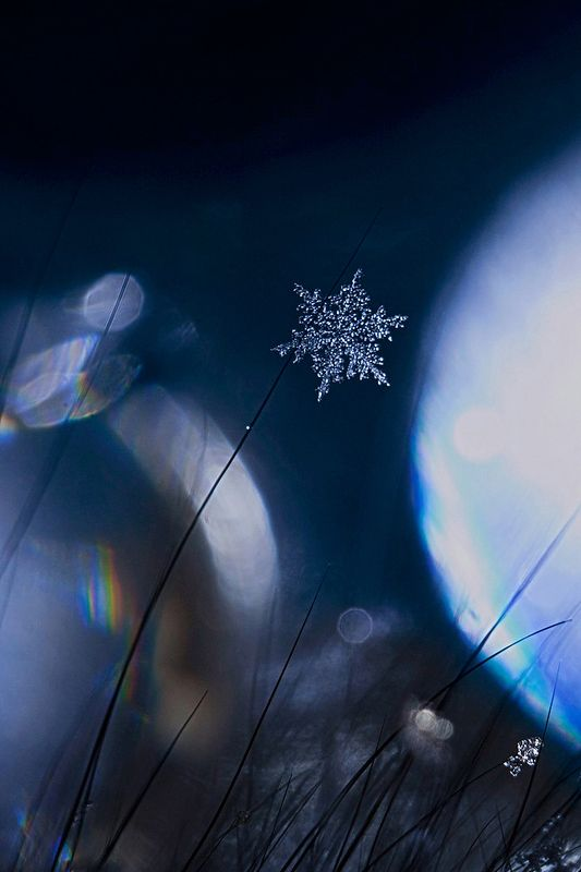 снежинка, зима, макро Одна из снежинок, что падает с небаphoto preview
