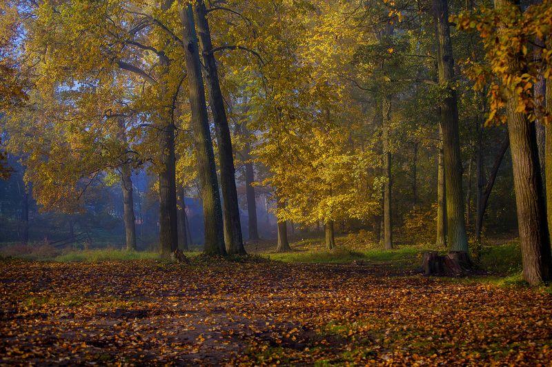 город, парк, осень, туман photo preview