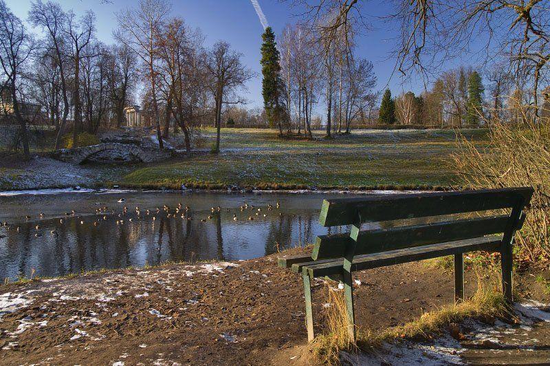 павовск, пруд, утки, скамейка, осень photo preview