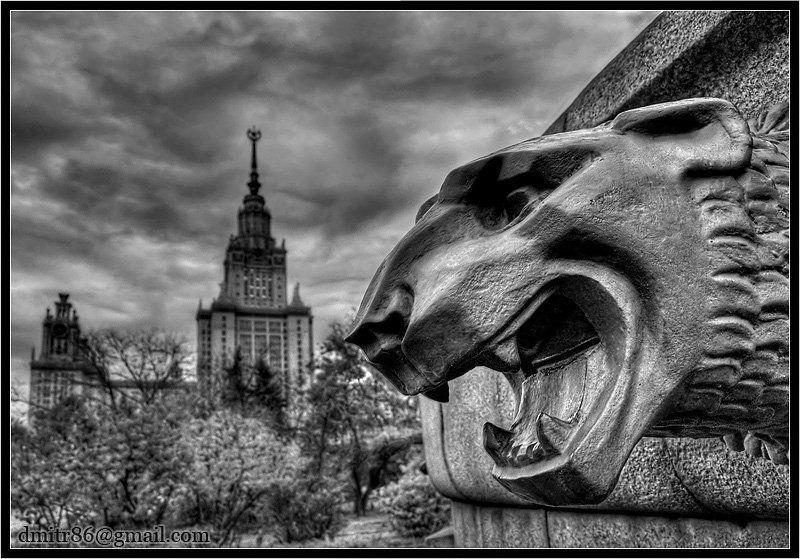 лев, мгу, хдр Lionphoto preview