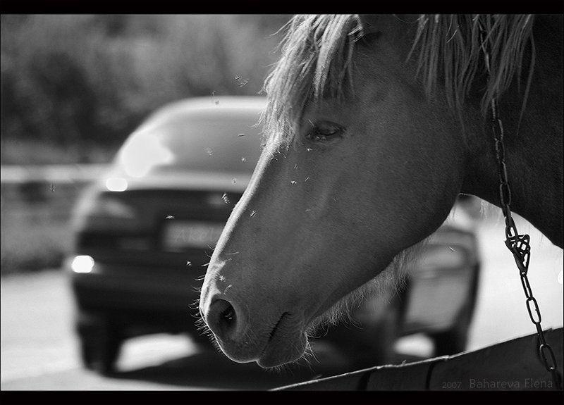 лошадиная силаphoto preview