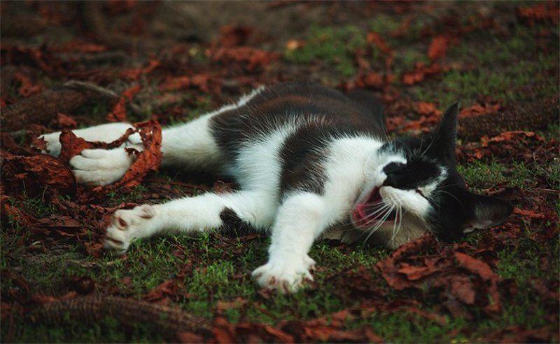 кот ..ну дайтееее же поспать!photo preview