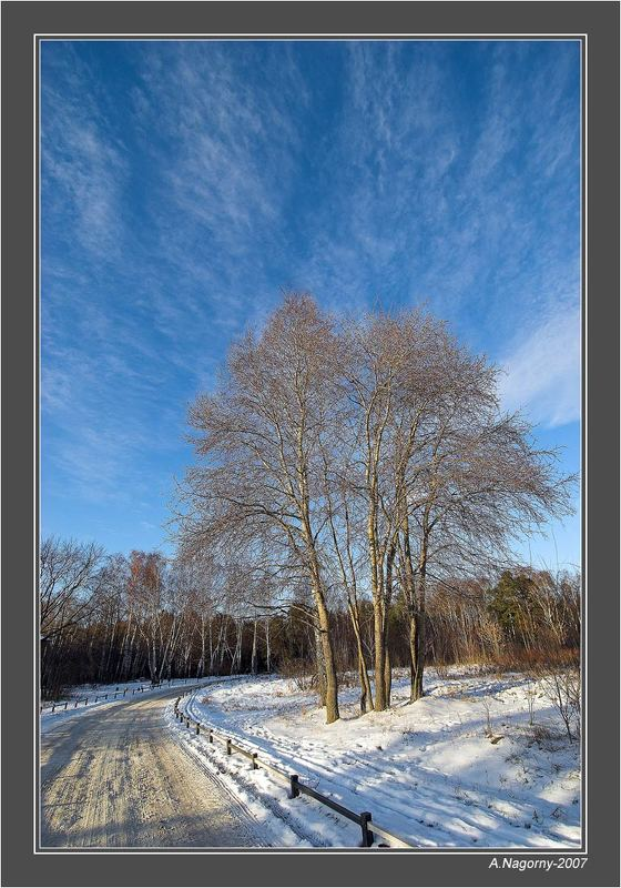 зима солнце снег небо деревья дорога парк кузьминки Зима в Кузьминкахphoto preview