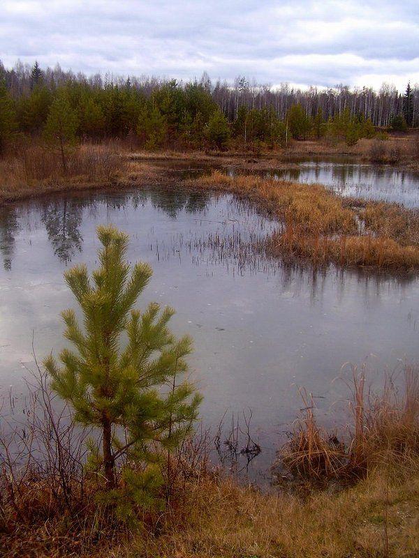 осень, лес, река, лед Холодный осенний деньphoto preview