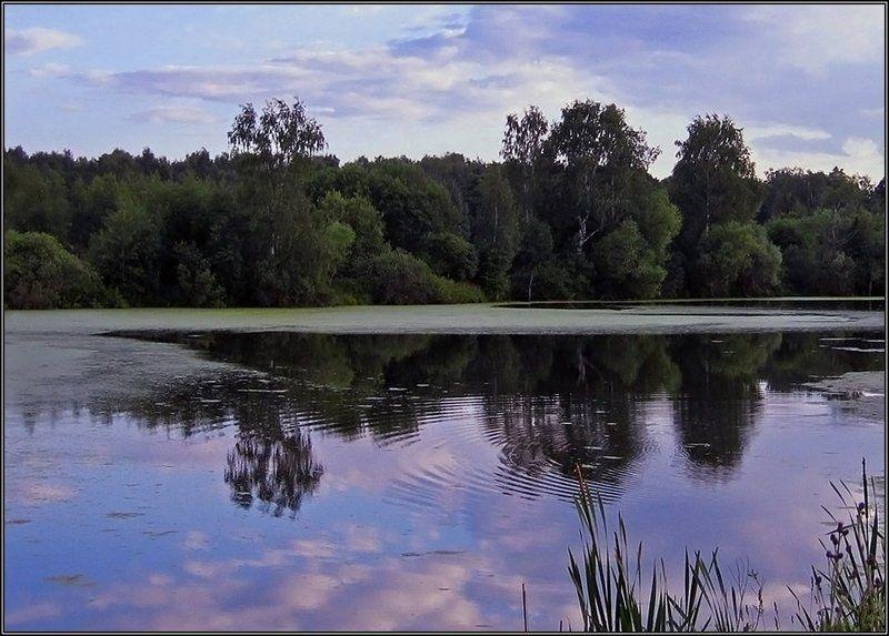 пруд, небо, отражение, круги на воде, лето Круги на воде...photo preview