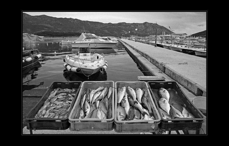 море, адриатика, черногория, рыбы Дары моряphoto preview