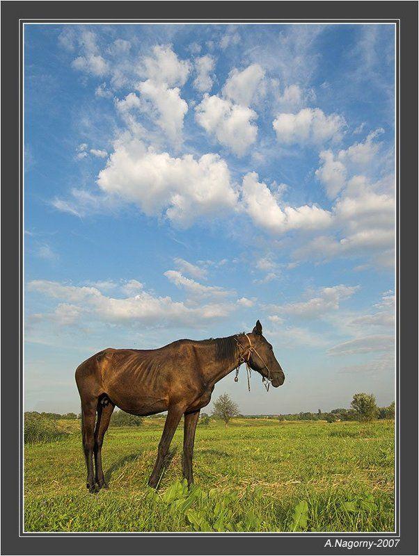 облака, белогривые, лошадки, :) О лошадке и белогривых облакахphoto preview