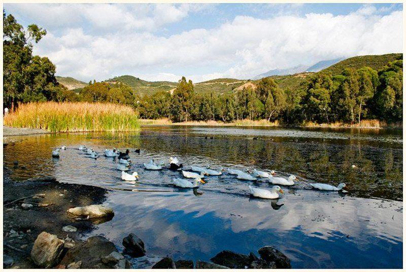 озеро, пейзаж, утки, природа, испания, spain, viuga неожиданный испанский пейзажphoto preview