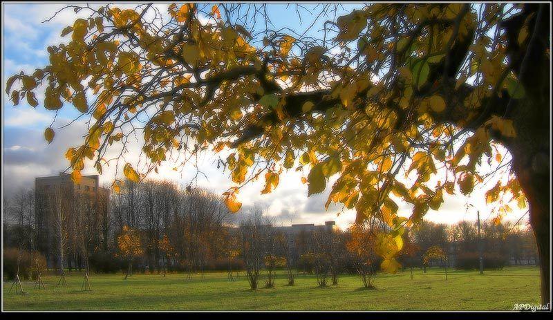 осень парк Осень в нашем паркеphoto preview