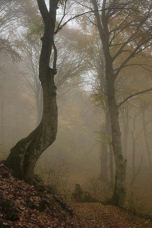 крым, туман, осень, лес photo preview