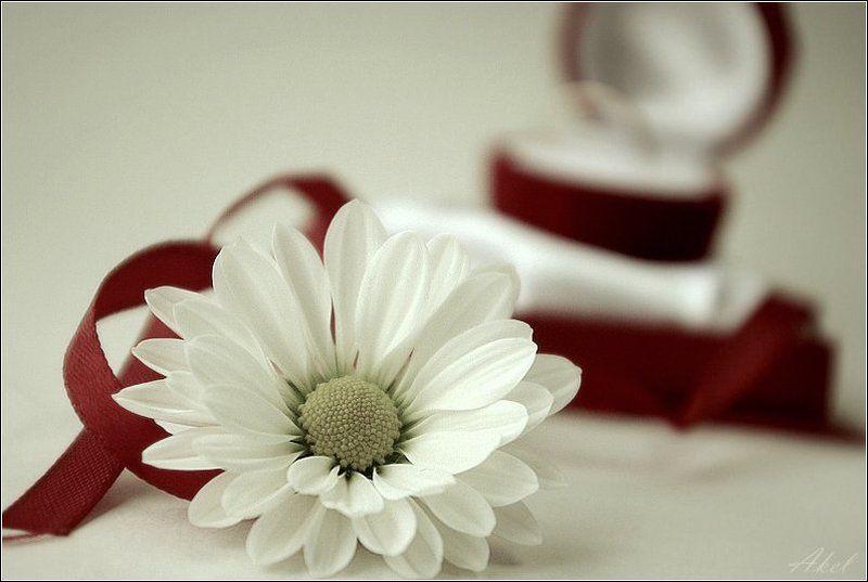 цветок, подарок presentphoto preview