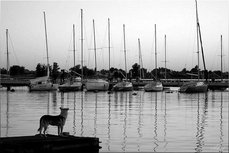 собака, яхты, чб дождусь...photo preview