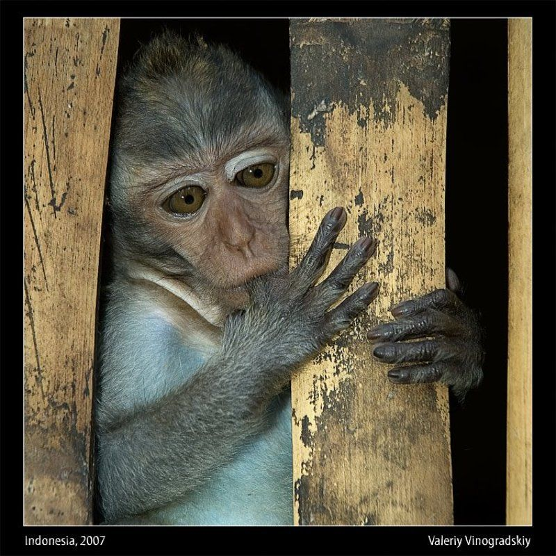 макака обезьяна photo preview