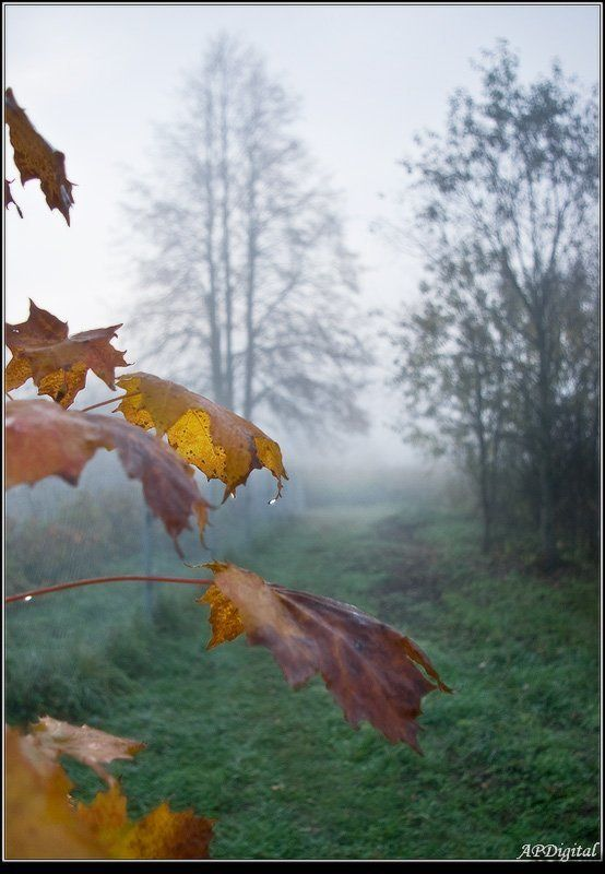 туман, капили,утро Туманное настроениеphoto preview
